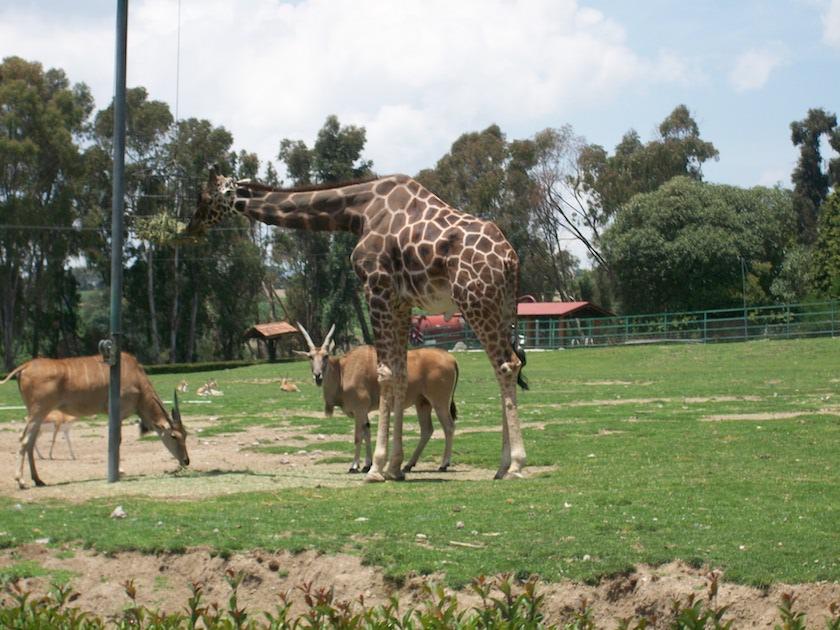 Zoológico-de-Zacango-8