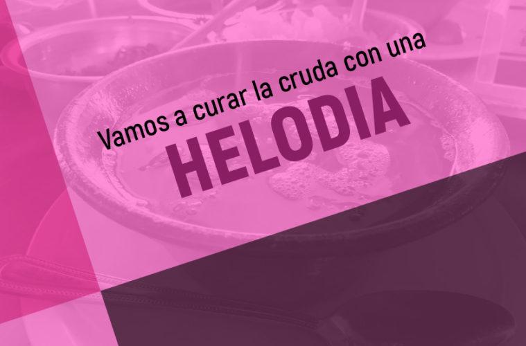 Helodia